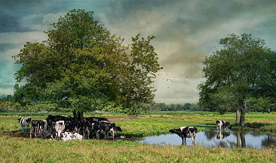 New England Dairy Farms Photograph - Keepin Cool by Robin-Lee Vieira