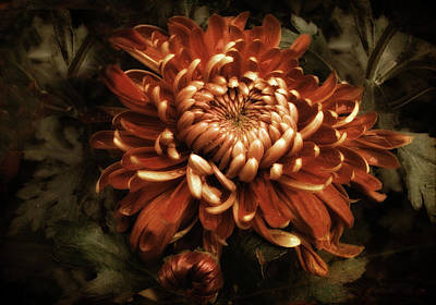 Chrysanthemum Photograph - Keeping Mum by Jessica Jenney