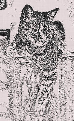 Kitty Digital Art - Keeping Watch by David G Paul