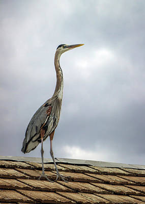 Photograph - Keeping Watch by Ed Clark