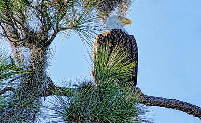 Photograph - Keeping Watch by HH Photography of Florida