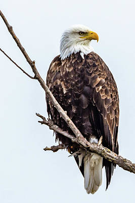Photograph - Keeping Watch by Jack Peterson
