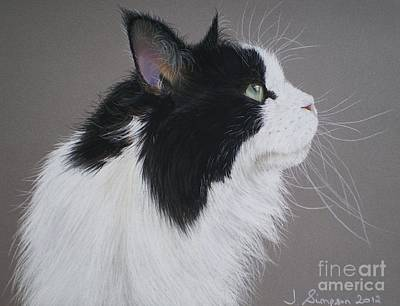 Keeps - Maine Coon Art Print by Joanne Simpson