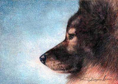 Drawing - Keeshond by Melissa J Szymanski