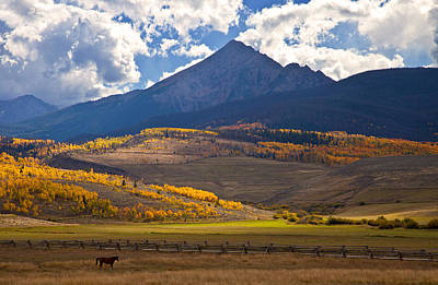 Gore Range Photograph - Keller Mountain Grazing by Chris Allington