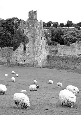 Photograph - Kells Priory Ireland Sheep Grazing By One Of The Seven Towers County Kilkenny Black And White by Shawn O'Brien