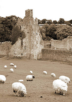 Photograph - Kells Priory Ireland Sheep Grazing By One Of The Seven Towers County Kilkenny Sepia by Shawn O'Brien
