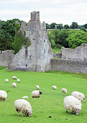 Photograph - Kells Priory Ireland Sheep Grazing By One Of The Seven Towers County Kilkenny by Shawn O'Brien