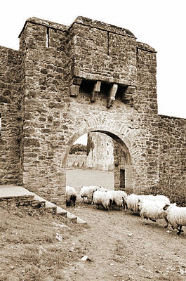 Photograph - Kells Priory Ireland Sheep Using The Medieval Arched Gatehouse Entry County Kilkenny Sepia by Shawn O'Brien