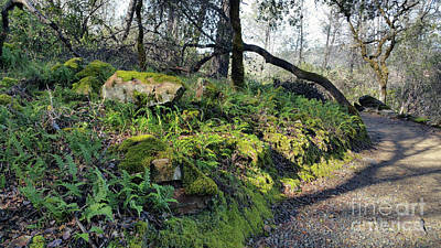 Photograph - Kelly Ridge Trail Ferns by Barbara Oertli