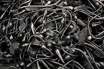 Photograph - Kelp II Toned by David Gordon