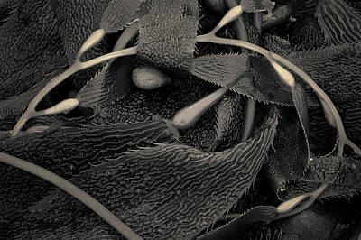 Photograph - Kelp IIi Toned by David Gordon