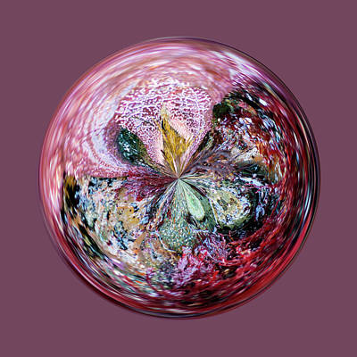 Photograph - Kelp In An Orb by Brent Dolliver