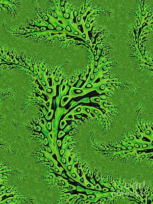 Kelp Print by John Edwards