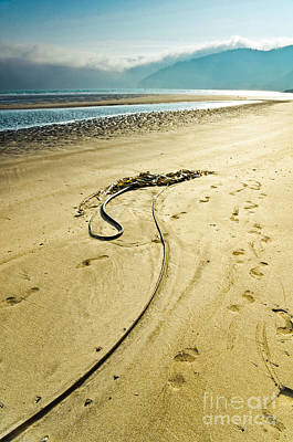 Kelp On The Seashore Art Print by Emilio Lovisa