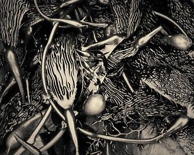 Photograph - Kelp V Toned by David Gordon