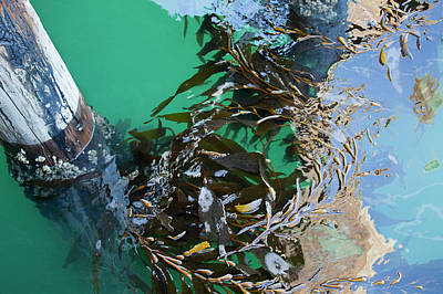 Photograph - Kelp World by Art Block Collections