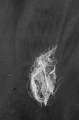Photograph - Kelp X-ray by Alexander Kunz