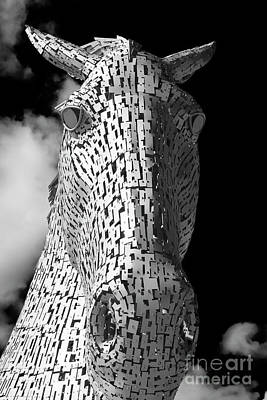 Photograph - Kelpie Head by Diane Macdonald