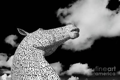 Photograph - Kelpie Head Profile by Diane Macdonald