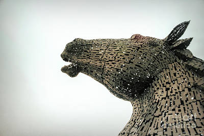 Photograph - Kelpie by Lynn Bolt