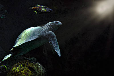 Kemp Photograph - Kemps Sea Turtle 2 by Janet Fikar