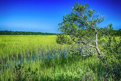 Photograph - Kent Mitchell Nature Trail, Bald Head Island by Dutch Ducharme
