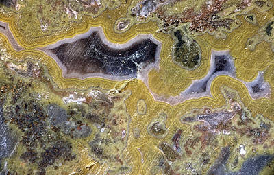 Photograph - Kentucky Agate by David Waldrop