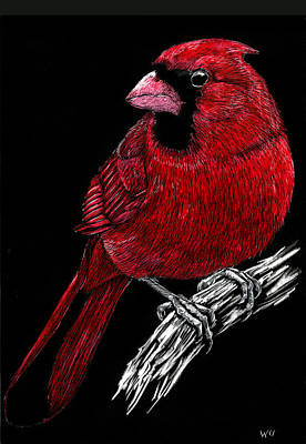 Drawing - Kentucky Cardinal by William Underwood