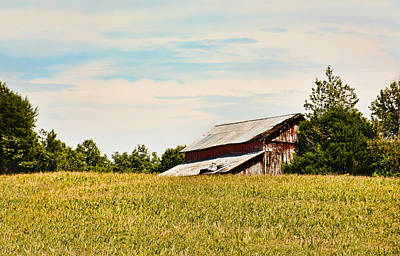Photograph - Kentucky Cornfield Barn by Greg Jackson