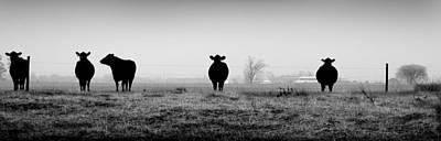 Kentucky Photograph - Kentucky Cows by Todd Fox