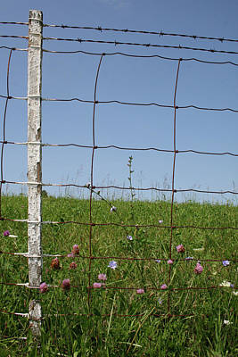 Photograph - Kentucky Fence by Dylan Punke