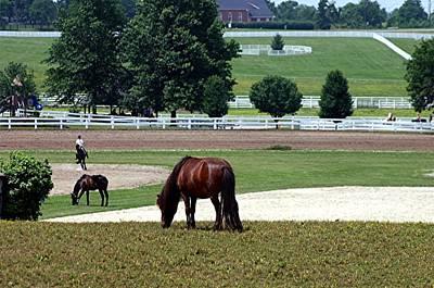 Kentucky Horse Park Digital Art - Kentucky Horse Park - Horses Grazing 2 by Thia Stover