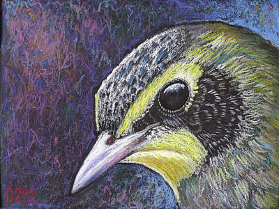 Warbler Painting - Kentucky Warbler Portrait by Ande Hall
