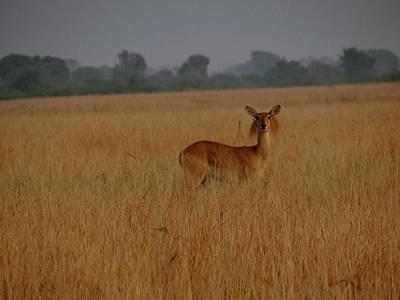 Exploramum Photograph - Uganda Wildlife In Qenp Grey Tones by Exploramum Exploramum