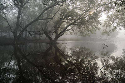 Photograph - Keoladeo Park Wetlands 01 by Werner Padarin