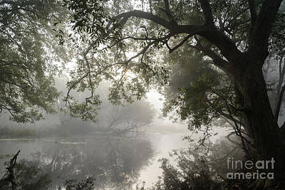 Photograph - Keoladeo Park Wetlands 03 by Werner Padarin