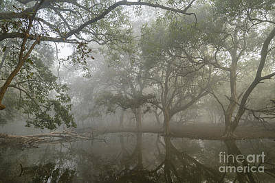 Photograph - Keoladeo Park Wetlands 04 by Werner Padarin