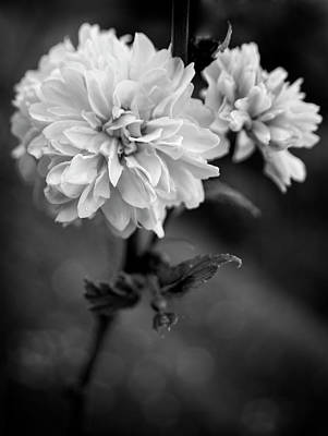 Photograph - Kerria In Black And White by Chrystal Mimbs