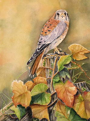Kestrel In Fall Art Print by Patricia Pushaw