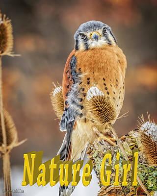 Predator Photograph - Kestrel Nature Wear by LeeAnn McLaneGoetz McLaneGoetzStudioLLCcom