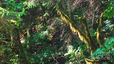 Photograph - Ketchikan Green by Laurianna Taylor