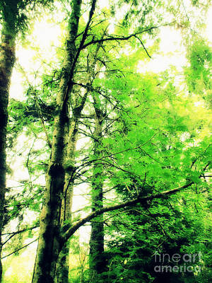 Photograph - Ketchikan Trees by Eve Penman