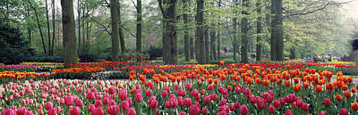 Visitors Photograph - Keukenhof Garden, Lisse, The Netherlands by Panoramic Images