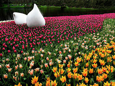 Photograph - Keukenhof by Paul Wear