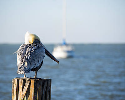 Photograph - Key Largo Florida Yellow Headed Pelican Yacht 2 by Toby McGuire
