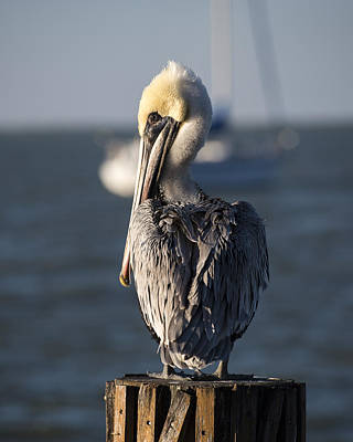 Photograph - Key Largo Florida Yellow Headed Pelican Yacht by Toby McGuire