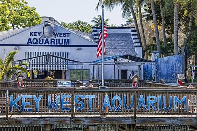 Photograph - Key West Aquarium by Bob Slitzan