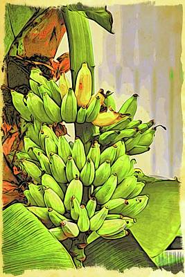 Photograph - Key West Bananas by Alice Gipson