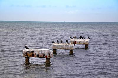 Key West Digital Art - Key West Black Ducks by Bill Cannon